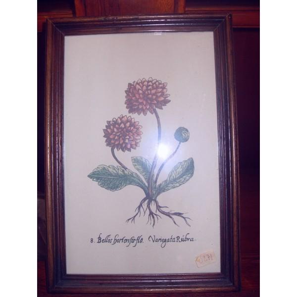 "Картина ""Bellis"", колекция ""Ботаника"""